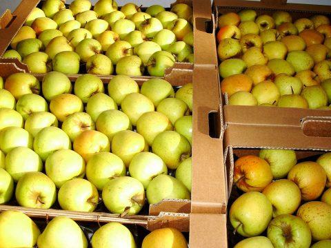 cascina-palazzo-golden-apples
