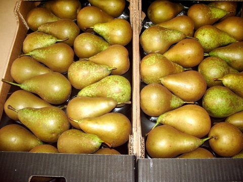 cascina-palazzo-conference-pears