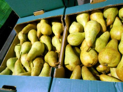 cascina-palazzo-abate-fetel-pears